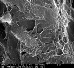 Scanning Electron Microsope imge of Palmyra biochar Courtesy: Alternative Energy & Nanotechnology Lab, IIT Chennai