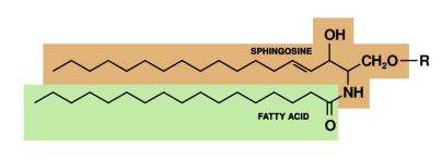 Sphingolipid
