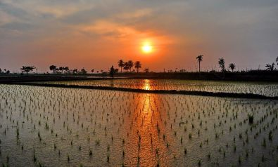 Paddy_field._Sunset_Abhijit Kar Gupta